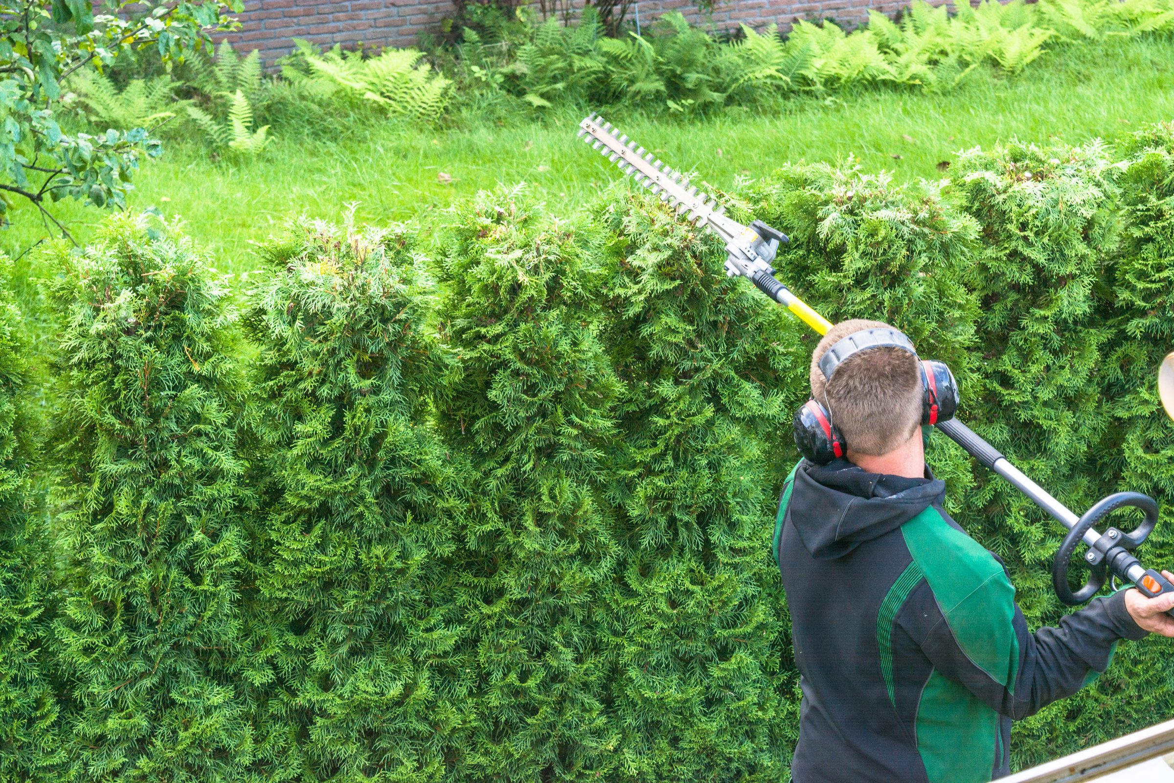 tuinonderhoud hovenier tuinman